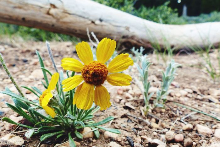Bryce Canyon Beautiful Flowers Flowers