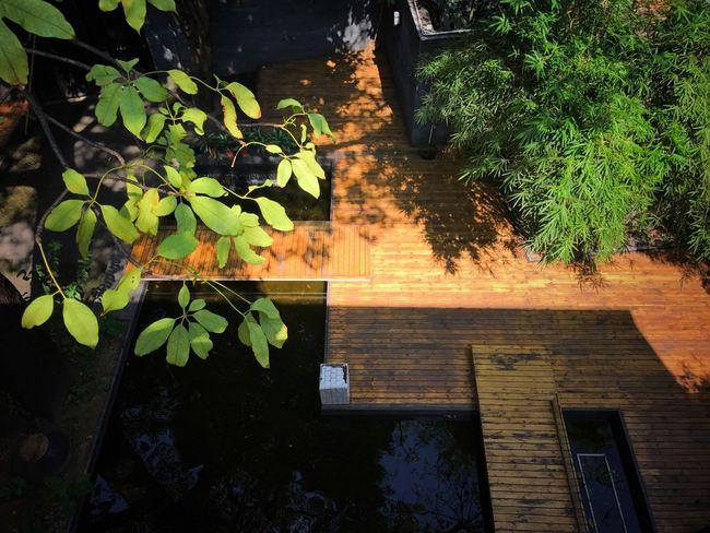 Leaf Tree Sunlight Autumn