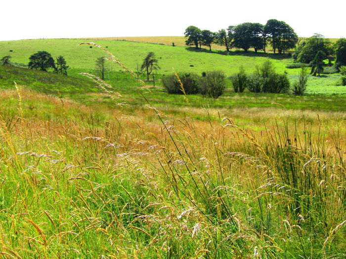 Mendip Hills Light And Dark Spaces Natural Light And Shade Grasses In The Wind Nature On Your Doorstep Nature Landscape