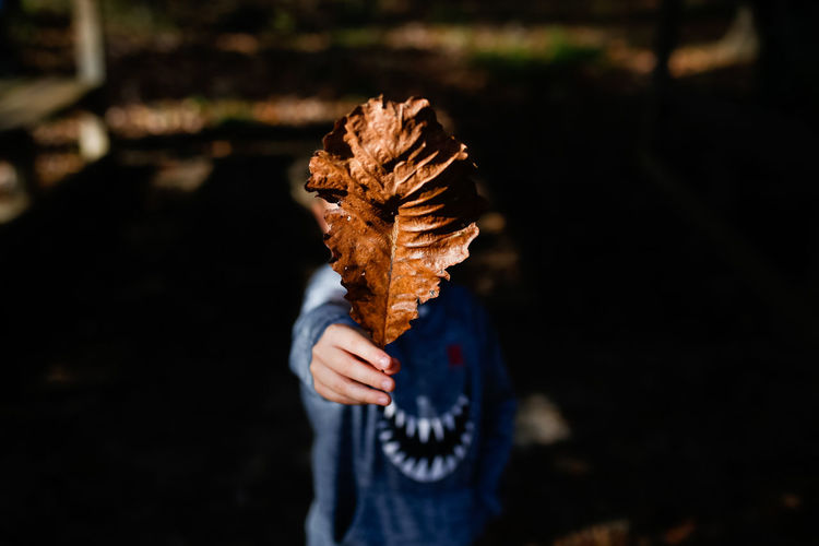 Young child holding leaf in front of face in the fall Boy Child Childhood Childhood Memories Fall Fall Beauty Fall Colors Leaf Leaves Fall Leaf Close-up Day Autumn Outdoors Hand Focus On Foreground One Person Holding Nature Front View EyeEmNewHere Autumn Mood