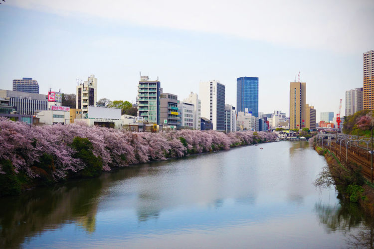 Architecture Built Structure Cherry Blossoms City Cityscape Flower Japan Kagurazaka Nature Outdoors River Sky Skyscraper Spring Tokyo Water 川 桜 神楽坂 2016