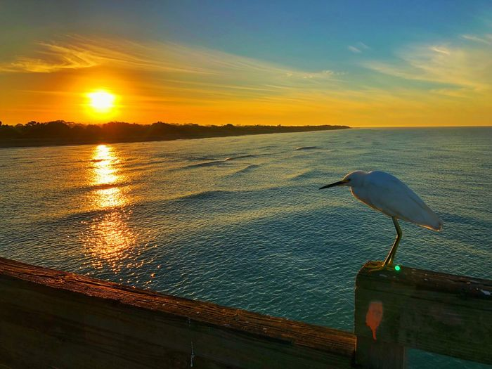 Seagull perching on a sea during sunset