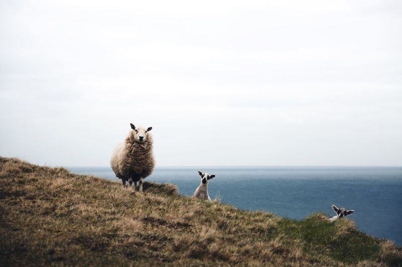 What's up. Shetland Scotland Sky Sea Horizon Over Water Water Copy Space Nature Beauty In Nature Day Horizon Land Scenics - Nature Plant Animal Themes Animal Clear Sky Vertebrate Non-urban Scene Mammal Outdoors