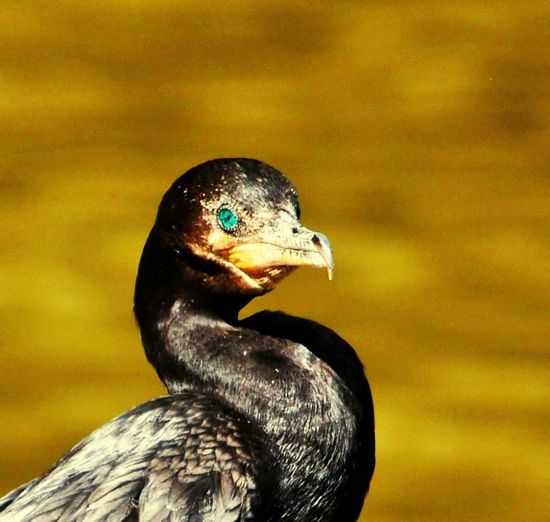 Brazil Bird Photography Angelogalgo Wildlife Portrait