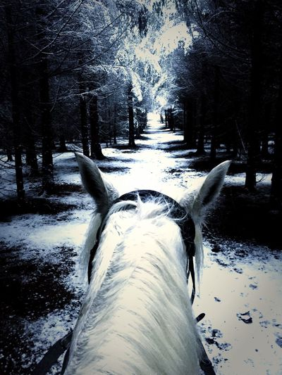 Snow Winter Cold Temperature Tree Beauty In Nature Tranquility WoodLand Almaamorosa Riding Horse The Culture Of The Holidays