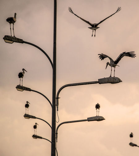 Low angle view of birds perching on street lights against sky