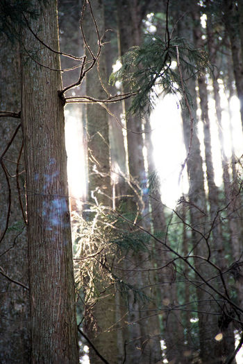 Branch Day Forest Nature Outdoors Sunlight Tree Tree Trunk
