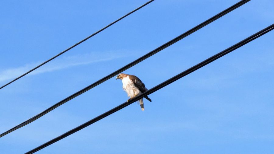Low angle view of bird perched against blue sky