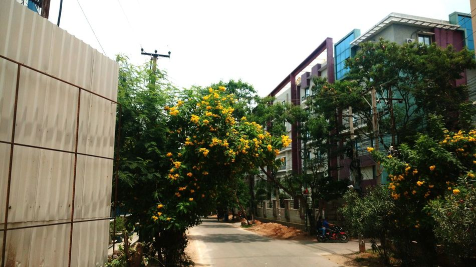 Architecture Tree Built Structure Building Exterior Growth Day Narrow Outdoors Green Sky Green Color Diminishing Perspective City Life No People Long Surrounding flowers Roadside Flowers Flowers,Plants & Garden Roadscenes Flowers :) Roadtrippin Road Trip Smallroads Roadsidephotography Riding