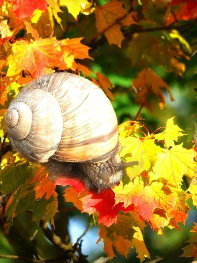 Shell Leaf
