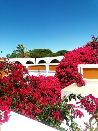 Flowers Outdoors Pink Flowers Sky Plant Built Structure Arquitecture Beautiful Market Architecture Detail Taking Photos Tranquility Peace And Quiet Beautiful City Photography City Blue Loule Quinta Do Lago Portugal