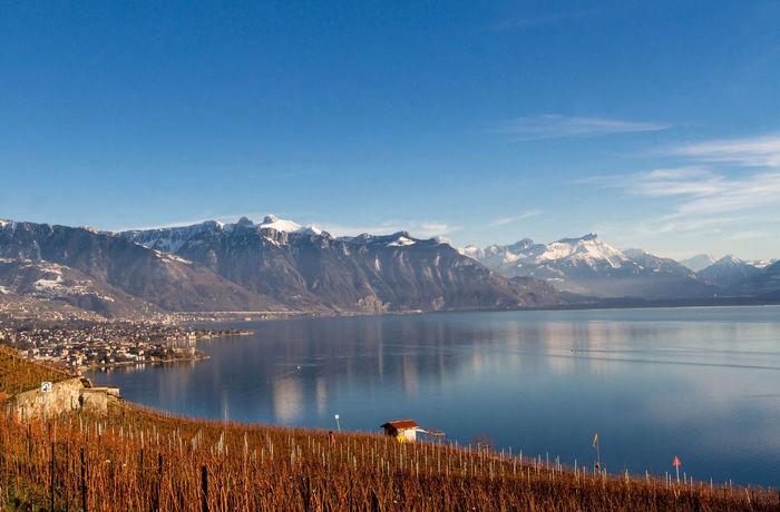 Panorama Switzerland Lavaux Lausanne Lac Léman Blue Sky Lake Vineyard Leafless Nature