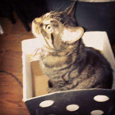 Just chillin Cat Catsofinstagram Chillin Lovesboxes