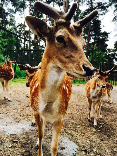 Animals Bambi