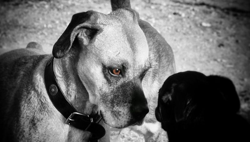 Dimpan Dimpanphotographs Relationship Problems Outdoors Streetphotography Hypnotize Me Dog Blackandwhite 2017 Blackandwhite Photography