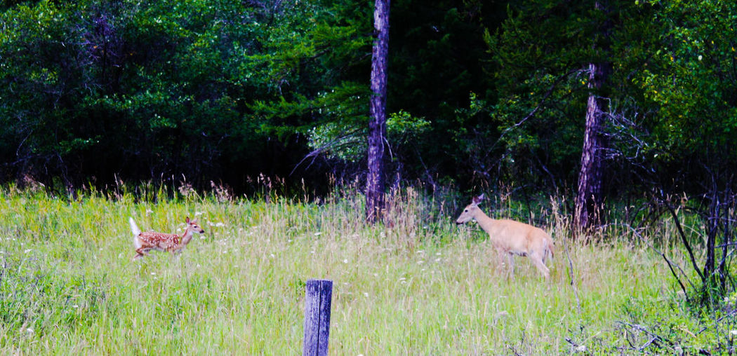 Taking Photos Enjoying Life Photography Enjoying Life Nature Wildlife Deer Moments Mama Baby Fawn