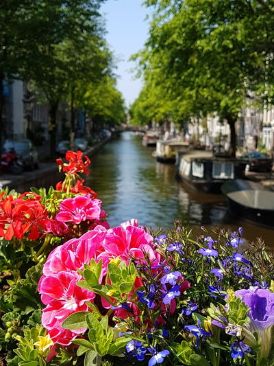 Canals And Waterways River Canal Amsterdam Amsterdamcity Amsterdam Amsterdam Canal Writing Postcards Postcard Postcard Picture Flower Head Flower City Water Tree Lake Summer Flowerbed Sky Plant Moored Boat Nautical Vessel