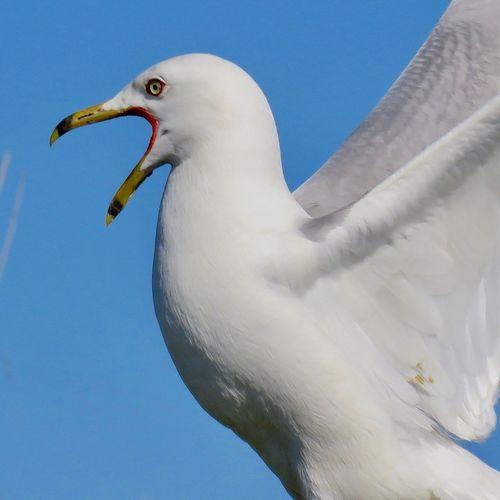 A Dancer Seagulls And Sea Seagulls In Flight A Dancer's Life ♡ First Eyeem Photo