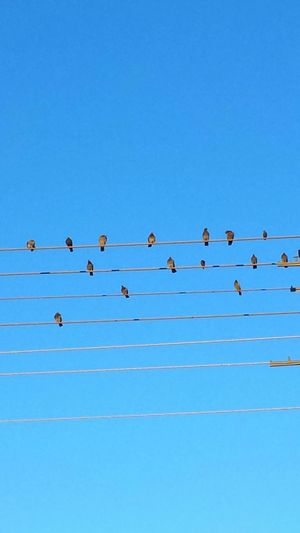Low Angle View Of Birds Perching On Pylon Lines Against Clear Sky