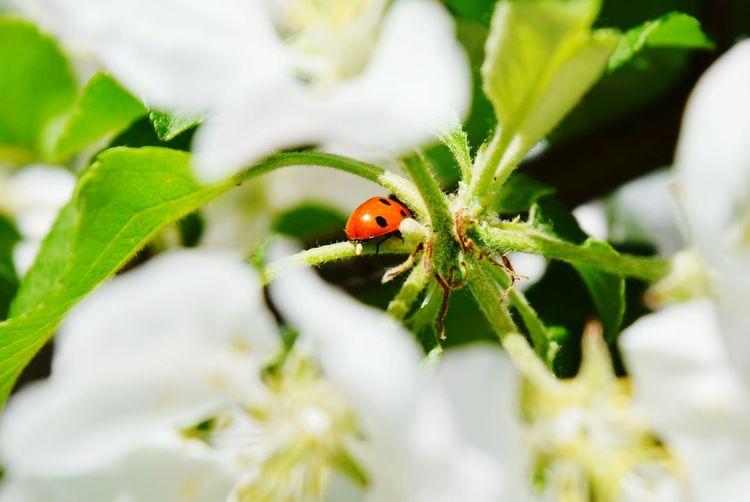 Ladybug On Flower Plant