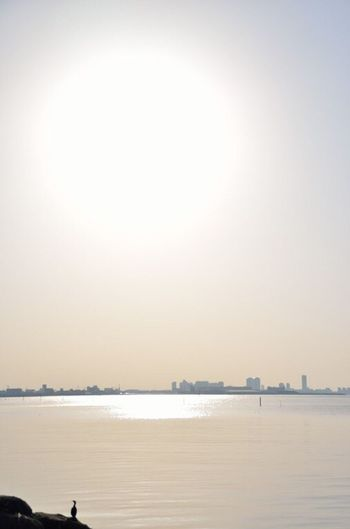 Lateafternoon Tokyo Bay Golden Afternoon Golden Hour Golden Light Golden Sunset Nikon Nikon D5100  43 Golden Moments