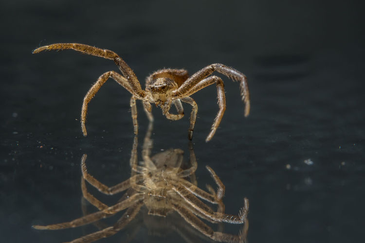 Close-up of spider with reflection on floorboard
