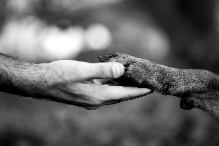 Cropped hand of man holding paw of dog