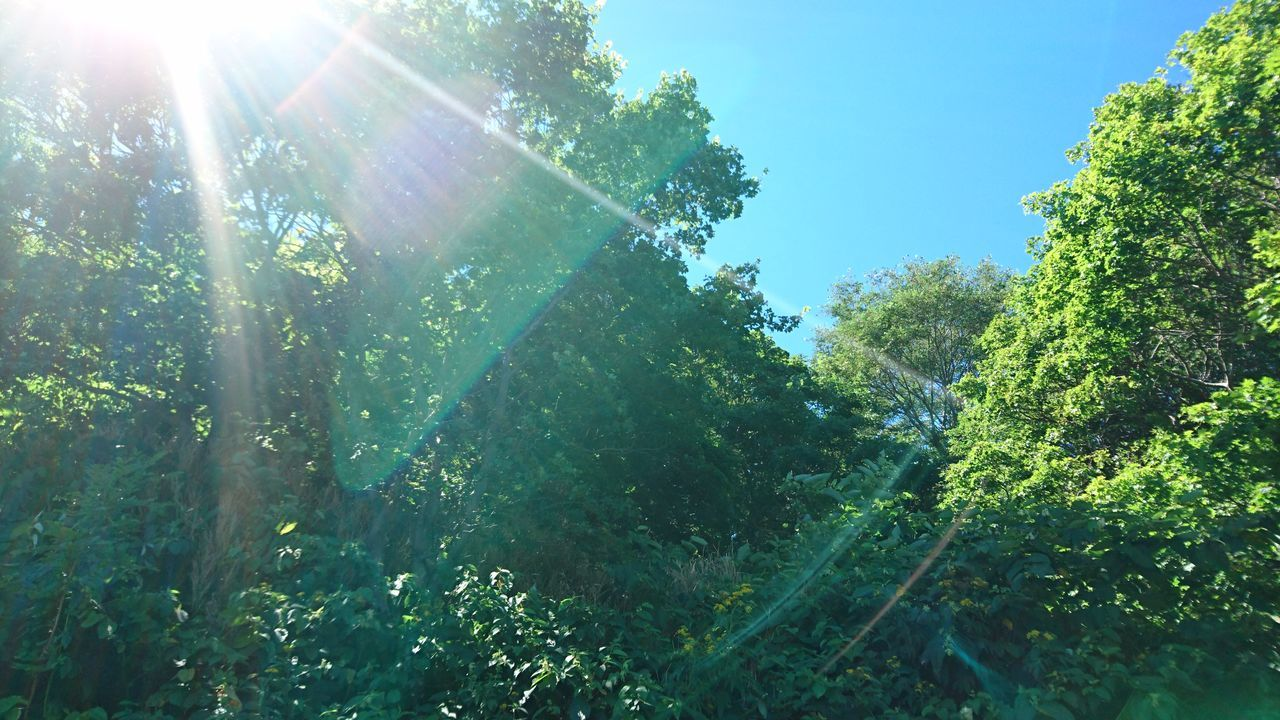sunlight, plant, nature, sunbeam, day, lens flare, growth, tree, green color, sky, low angle view, beauty in nature, no people, land, tranquility, sun, outdoors, forest, sunny, tranquil scene, streaming, solar flare, brightly lit