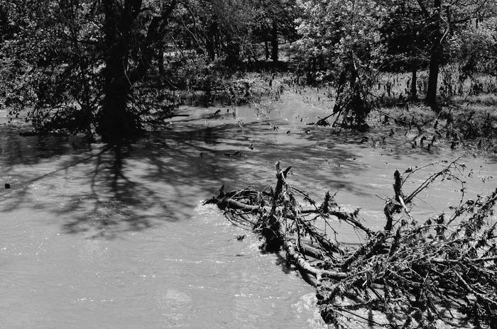 Crow Jane https://youtu.be/N0jRX69mxcE Taking Photos Monochrome flash flood Blues Creekside A Day In The Life Rural America Eye For Photography Check This Out What Are You Listen To
