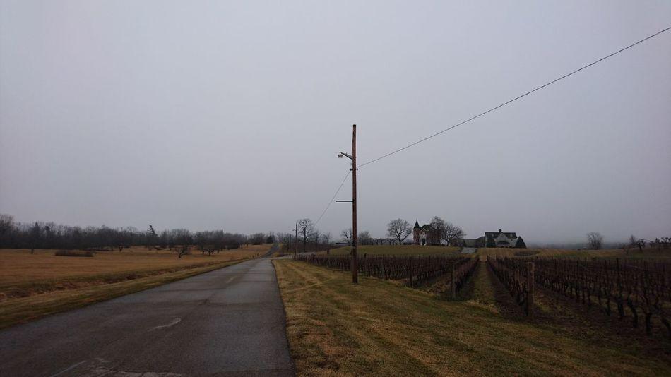 Winery Vineyard Niagara Wine Route