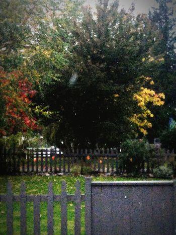 No People Nature Tree Day OctoberPhotoChallenge Beauty In Nature Weather Holidays PumpkinPatch🎃 Halloween Pumpkins Halloween2016