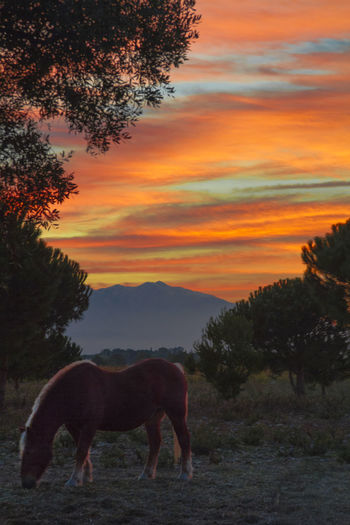 Animal Themes Beauty In Nature Day Domestic Animals Full Length Horse Photography  Landscape Mammal Nature No People One Animal Orange Color Outdoors Scenics Silhouette Sky Sunset Tranquility Tree