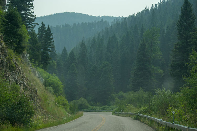 Road amidst trees and plants