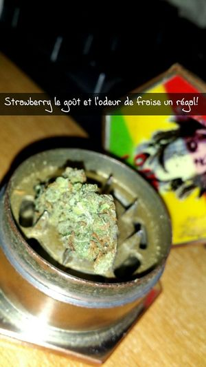 Frenchcloutboyz Smoking Weed Smokeweedeveryday Snapchat Moici Bang Bang Weed Life Strawberry Haze  Strawberry Oklm Elle sort du fraisier mais reste déconseillé au femme enceinte ! ☺