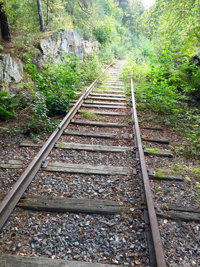 Railroad Track Transportation The Way Forward Tree Rail Transportation Stone - Object Outdoors Tranquil Scene Non-urban Scene Plant Countryside Day Tranquility Scenics Nature Diminishing Perspective Vanishing Point Messy Beauty In Nature Surface Level