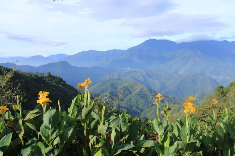 Mountain Beauty In Nature Scenics - Nature Growth Sky Plant Nature Tranquility Landscape Mountain Range Tranquil Scene Cloud - Sky Green Color Day Flower Flowering Plant Leaf Plant Part Environment Agriculture No People Outdoors Flower Head Plantation