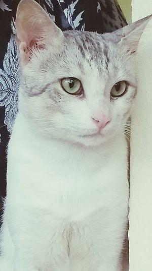 Pet 🐈 Pet Portraits