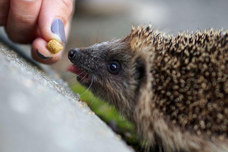 Close-up of hand feeding cat