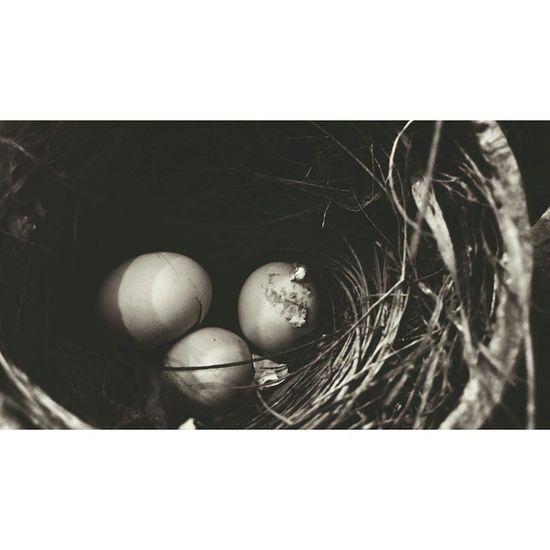 Yawrularım geliyor çok heycanliyim.. Angrybirds Egg Muhabbetkusu
