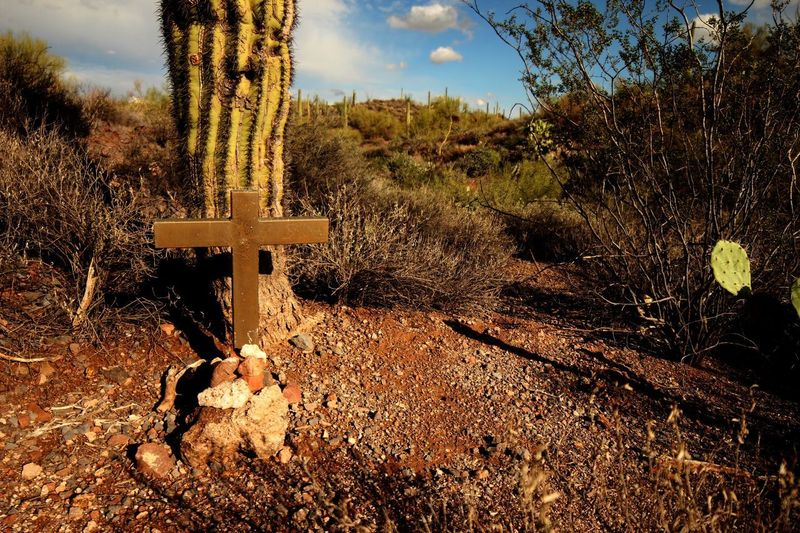 Low angle view of unmarked grave in the massacre grounds trail Saguaro Cactus Cactus Religous Cross Mourning Respect Unmarked Grave Plant Tree Cross Nature Sky No People Religion Day Belief Sunlight Outdoors Spirituality Land Tranquility Grave Growth Field