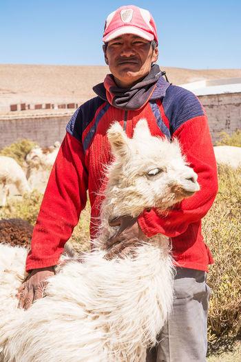 Farmer of lama in Argentina Alpaca Andes Animal Argentina Chile Farm Farmer Farmer's Life Farming Lama Llama Patagonia Person Peru Portrait San Antonio De Los Cobres Wool