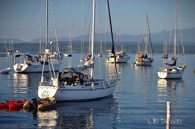 Lovely Day for a Sail Boats Water Puget Sound Port Townsend Sunny Day Sailing Reflection Water Reflections Nikon Enjoying Life