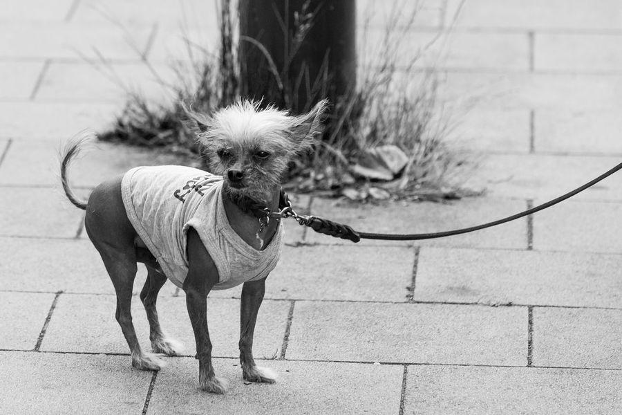Duesseldorf, Germany Hund Hundeleine Animal Themes Dog Domestic Animals No People One Animal Outdoors Pets Petswithattitude DogsWithAttitude Petswithpersonalities