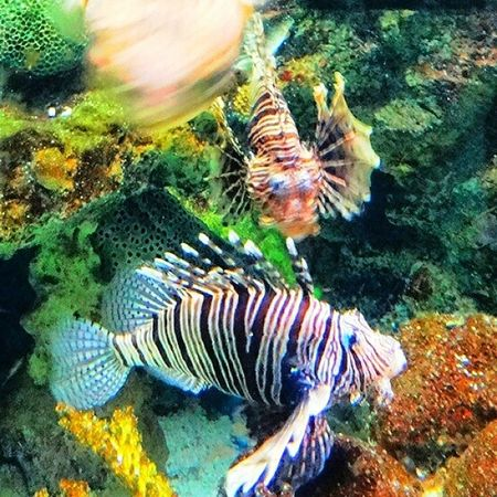 Fish Aquarium Fishtank Tagsforlikes Fishporn Instafish Instagood Swim Swimming Water Coral Reef Reeftank Tropical TropicalFish Aquaria Photooftheday Saltwater Freshwater Beautiful Ocean Watertank