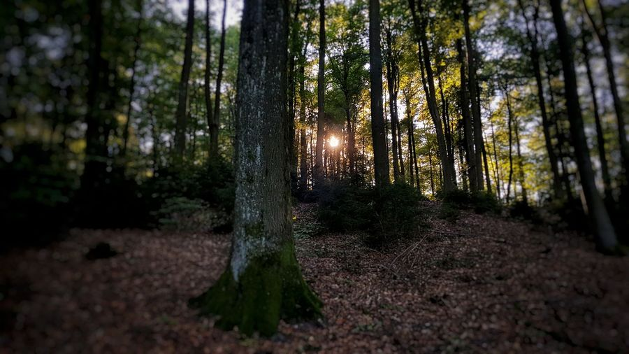 Glücklich ist, wer vergisst, was nicht mehr zu ändern ist . . . . . . . . Happy is who forgets what can not be changed My Picture 2018 Goodnight Samsungphotography Samsung S8 Mobilephoto GERMANY🇩🇪DEUTSCHERLAND@ Rheinland-Pfalz  Daylight Malephotographerofthemonth EyeEm Germany Panoramic View Good Night ♡♡ Beautiful Nature Alone But Not Lonely On The Road Tree Tree Area Forest Tree Trunk Pinaceae Pine Tree WoodLand Sky Landscape Countryside Scenics Calm
