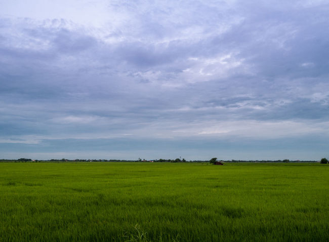 Agriculture Beauty In Nature Cloud Cloud - Sky Cloudy Day Field Grass Grassy Green Green Color Growth Horizon Over Land Idyllic Landscape Nature No People Outdoors Overcast Rural Scene Scenics Sky Tranquil Scene Tranquility Weather