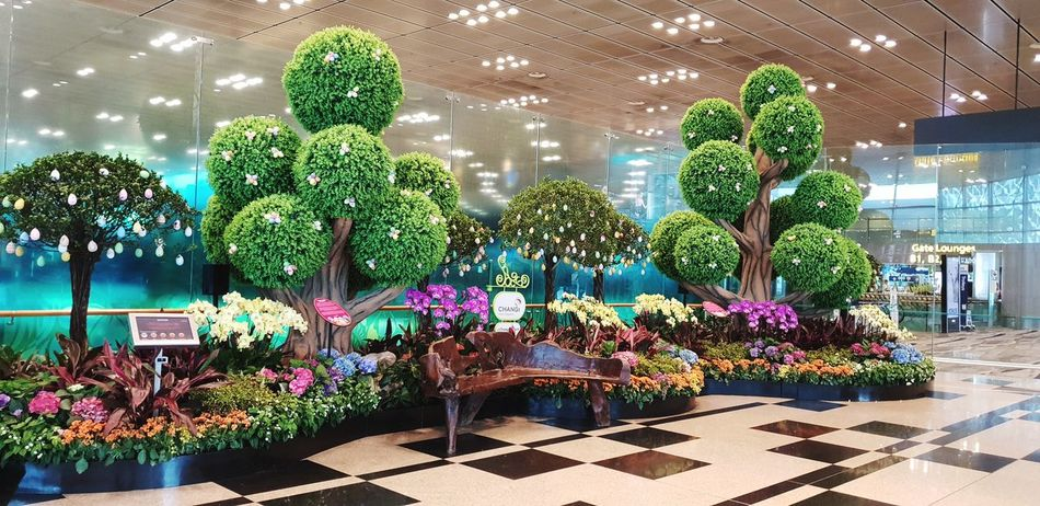 Changi airpot Airpot Changi Airport Tree City Architecture Plant Topiary Botanical Garden Growing Christmas Lights Pollen Flower Head Hedge Toadstool Tree Topper Greenhouse Christmas Decoration Flowering Plant Fungus Christmas Ornament Christmas Christmas Market