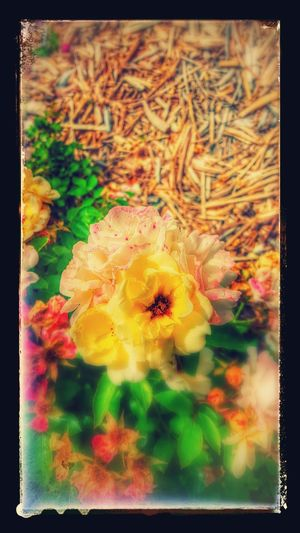 Flowers look so beautiful I had to take a picture of them. On the way to Arts cardio rehab. Yellow Flowers Petals🌸 Petalsandbuds Colors Of Nature Beautiful Colors Spring 2016