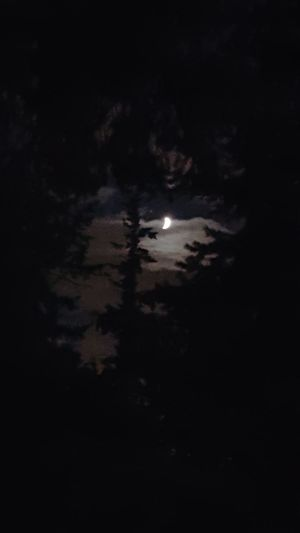 Moon and clouds and trees. Urban Nightsky Moon Hugging A Tree
