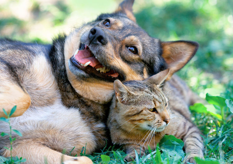 Cat Dog Cat And Dog Adorable